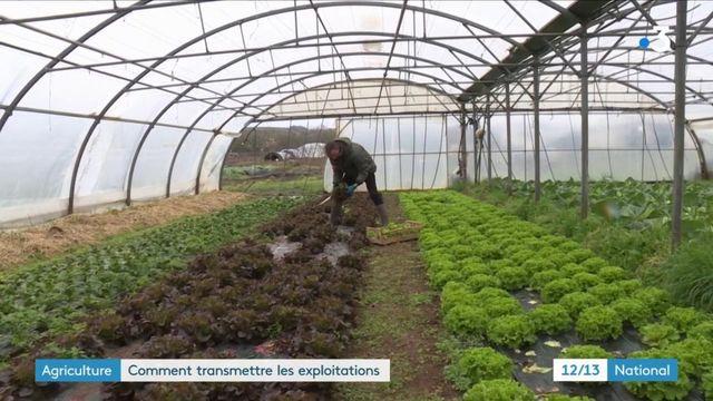 Agriculture : des exploitants proches de la retraite peinent à trouver des repreneurs