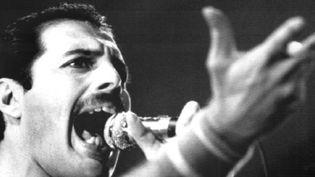 Freddie Mercury en 1984  (DB / DPA / DPA/AFP)