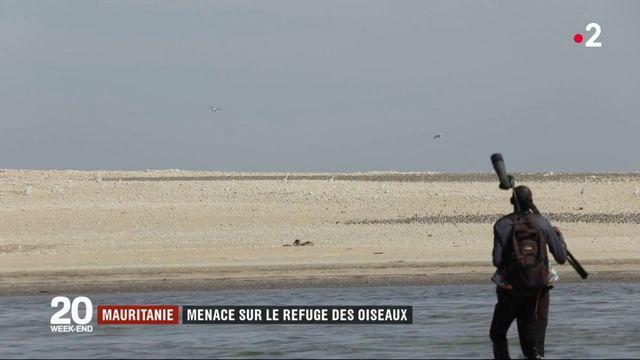 Mauritanie : menace sur le refuge des oiseaux