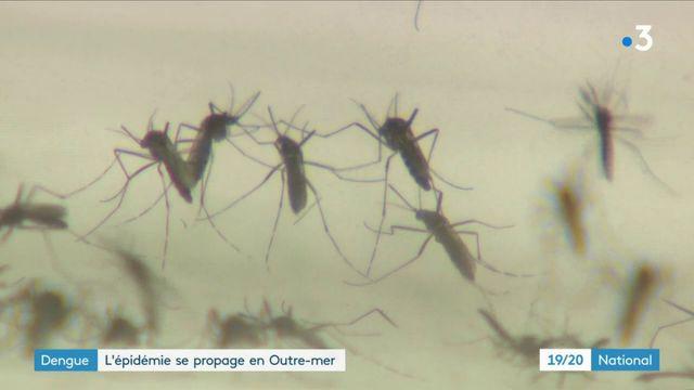 Santé : l'Outre-mer touché par une épidémie de dengue