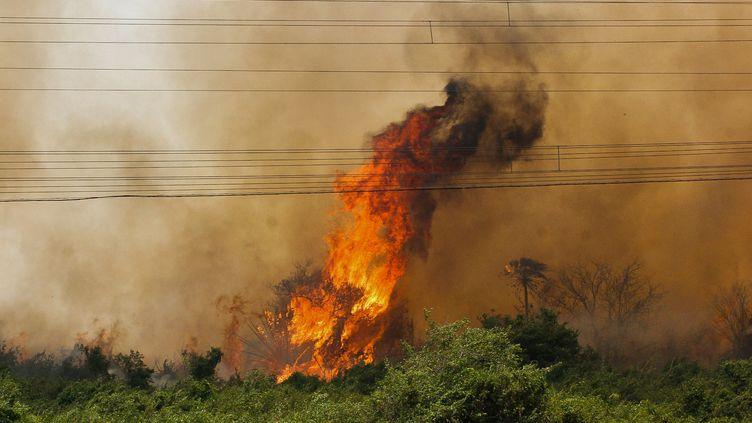 Une photo d'un incendie au Pantanal, diffusée par le gouvernement de l'Etat Mato Grosso, le 30 octobre 2019. (CHICO RIBEIRO / MATO GROSSO DO SUL STATE GOVERNM / AFP)
