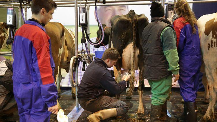 La traite de vaches au salon de l'agriculture, à Paris, le 26 février 2016. (MAXPPP)