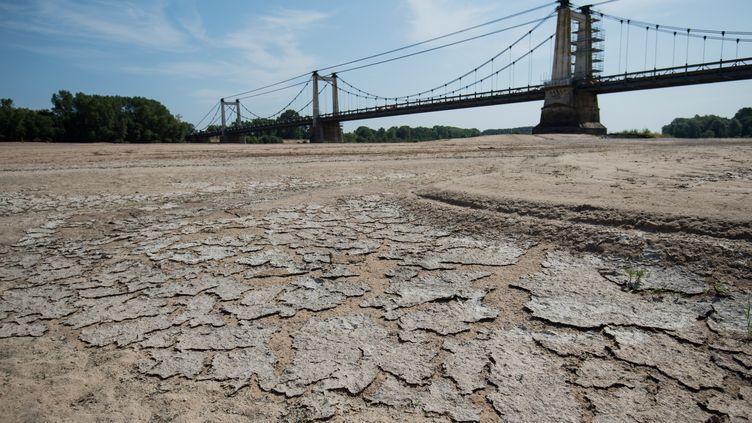 Le lit de la Loire àMontjean-sur-Loire, le 24 juillet 2019. (LOIC VENANCE / AFP)