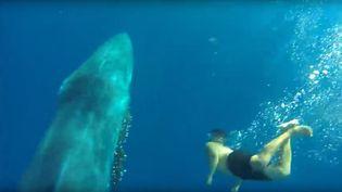 César Espino, un jeune plongeur espagnol qui est parvenu à libérer une baleine du filet de pêche qui l'entravait, le 2 janvier 2016 au large de l'île de Fuerteventura (Espagne). (YOUTUBE)