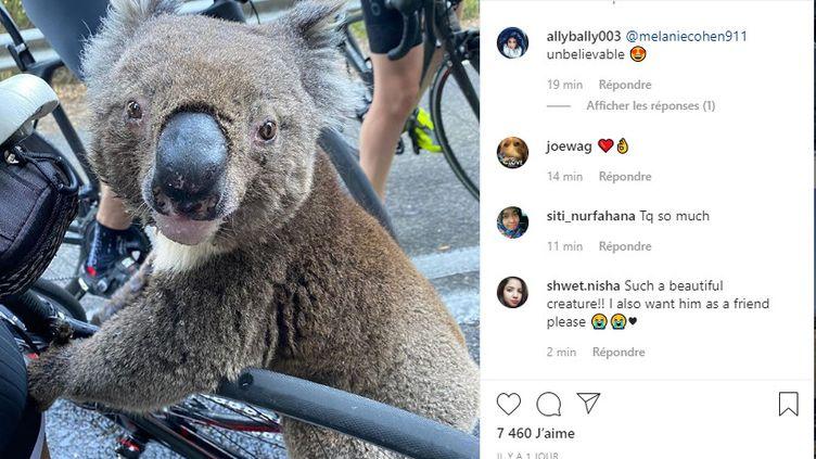 Un groupe de cyclistes australiens a porté secours à un koala assoiffé, dans la région d'Adélaïde, le 27 décembre 2019. (CAPTURE D'ECRAN)