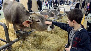 Une vache caressée par un jeune visteur du Salon de l'agriculture, le 24 février 2014 à Paris. (  MAXPPP)