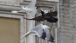 Une colombe lâchée pendant la prière de l'angélus place Saint-Pierre, au Vatican, se fait attaquer par un corbeau et un goéland,le 26 janvier 2014. (GREGORIO BORGIA / AP / SIPA)