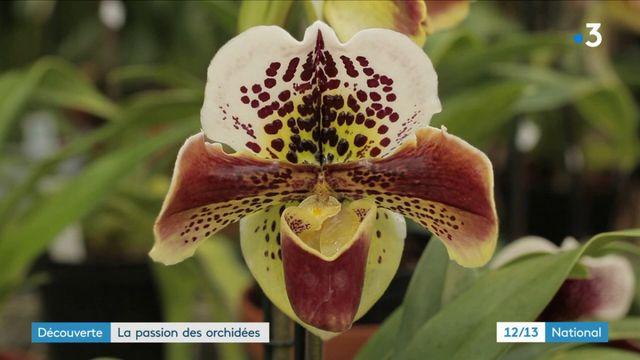 Fleurs : la passion des orchidées