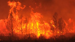 Un gigantesque incendie s'est déclaré en Catalogne à la frontière franco-espagnole, le 22 juillet 2012. Ici, les flammes s'attaquent à la forêt près de La Jonquère (Espagne). (LLUIS GENE / AFP)