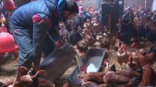 À l'approche des fêtes de fin d'année, Alexandre un éleveur du Cantal, se prépare au grand rush. Plus de 400 de volailles devraient être vendues en quelques jours. (FRANCE 3)