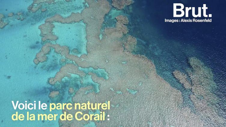 VIDEO. En Nouvelle-Calédonie, il plonge dans les derniers récifs vierges de la planète (BRUT)