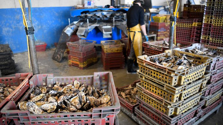 Des caisses d'huîtres, le 29 novembre 2019, à Cancale (Morbihan). (DAMIEN MEYER / AFP)