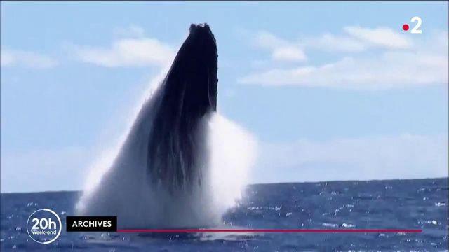 Insolite : un pêcheur américain avalé par une baleine