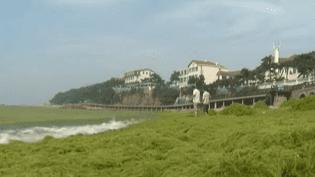 La villede Qingdao est envahie depuis quelques jours par une espèce d'algue verte, inoofensive pour l'homme. (CAPTURE FRANCE 2)