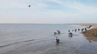 En Mauritanie, le banc d'Arguin accueille des millions d'oiseaux. Mais depuis quelques années, ce refuge protégé est en danger. (FRANCE 2)