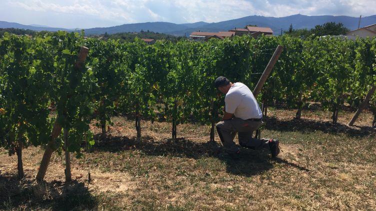 Un viticulteur à Grangier (Isère). (GUILLEMETTE FRANQUET / FRANCE-BLEU SAINT ETIENNE LOIRE)