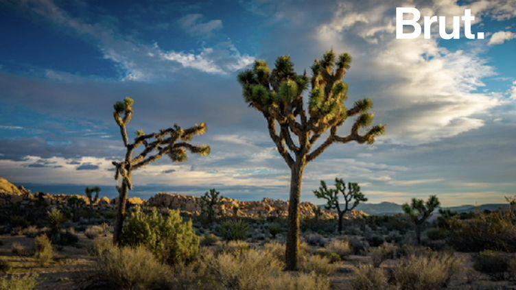VIDEO. États-Unis : à cause du shutdown, le parc national de Joshua Tree va devoir fermer (BRUT)