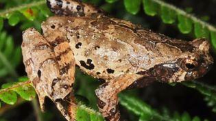 WWF vient de publier les photos de plus de 150 nouvelles espèces découvertes pour la plupart en Asie du Sud-Est. (FRANCE 2)