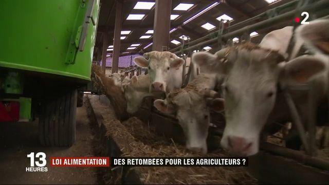 Loi alimentation : le désenchantement des agriculteurs