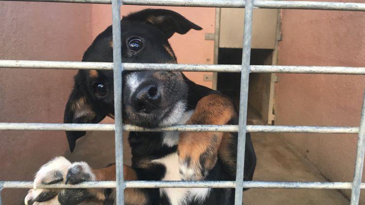 Un chien à adopter à la SPA de Chambéry en janvier 2019 (illustration). (VALENTINE LETESSE / RADIO FRANCE)