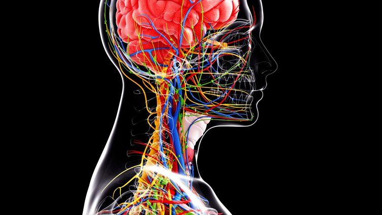 Un spécialiste américain des neurosciences, James Fallon,a découvert lors de ses recherches, en 2005, qu'il était lui-même un psychopathe. (SKE / SCIENCE PHOTO LIBRARY / AFP)