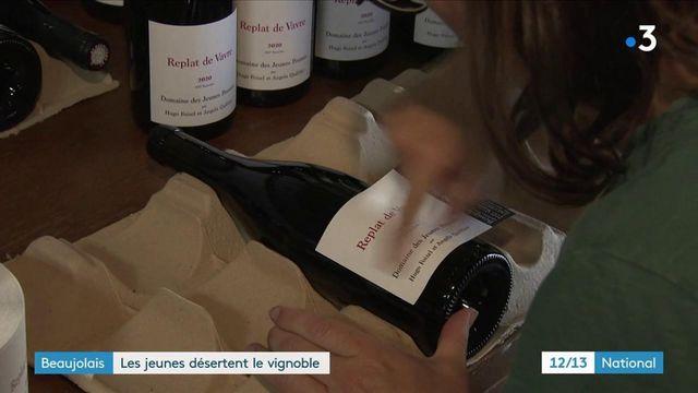 Beaujolais : de moins en moins de jeunes dans les vignobles