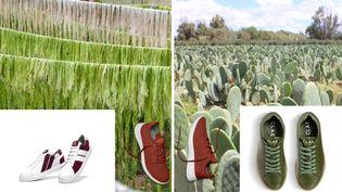 Les marques plus responsables utilisent des déchets issus de l'agroalimentaire pour réaliser leurs créations (DR)