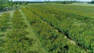 Dans les Pyrénées-Orientales, les agriculteurs se convertissent de plus en plus au bio. Plus d'un tiers des parcelles sont cultivées selon l'agriculture biologique. Comment expliquer un tel engouement ? (FRANCE 2)