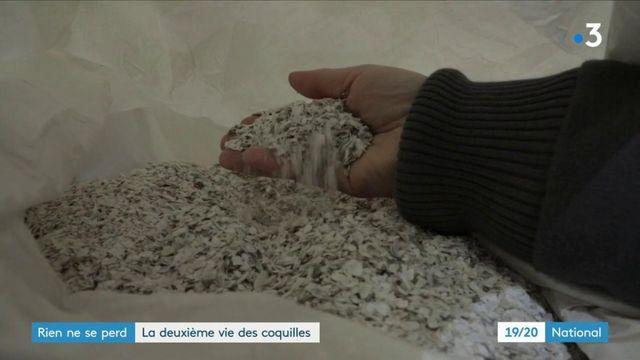 Huîtres : la seconde vie des coquilles
