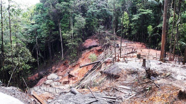 À Cacao en Guyane, la fôret est dévastée par la ruée vers l'or en juin 2019. (CÉLIA QUILLERET / FRANCE-INTER)