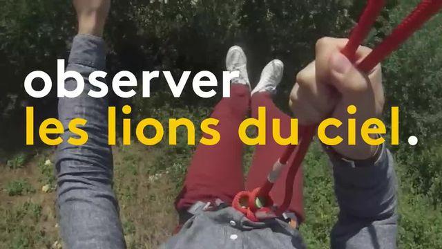 Vol au dessus des lions
