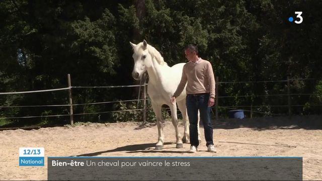 Bien-être : des séances pour maîtriser son stress avec l'aide d'un cheval