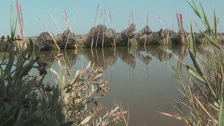 Hérault : l'étang de l'Or, un réservoir de biodiversité à la beauté fragile (France 3)