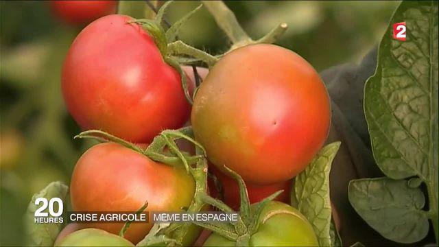 Espagne : les maraichers touchés par la crise agricole