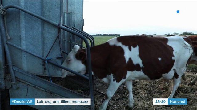 Alimentation : les fromages au lait cru écartés par les règles d'hygiène