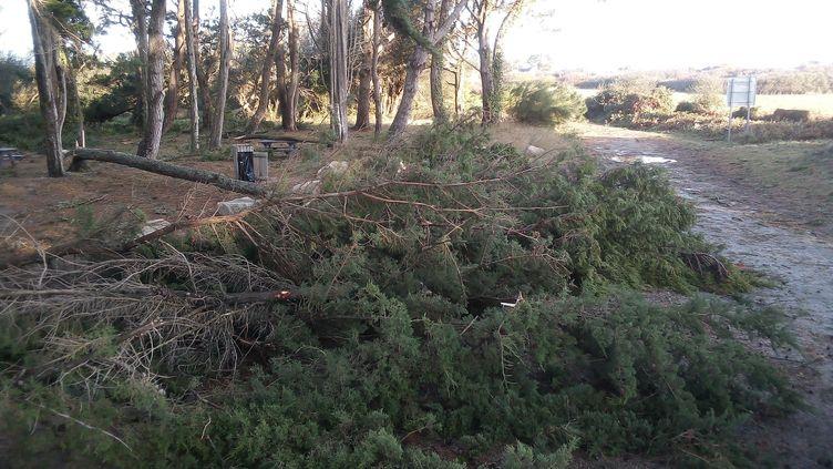 Les conséquences des vents violents provoqués par la tempête Alex à la Trinité-sur-Mer, vendredi 2 octobre. (MAXPPP)
