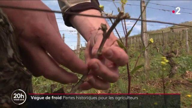 Gel : les agriculteurs déplorent des pertes historiques