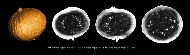 Les premières images réalisées via l'IRM du projet Iseult. Les chercheurs ont utilisé un potimarron pour tester l'appareil en toute sécurité. (CEA)