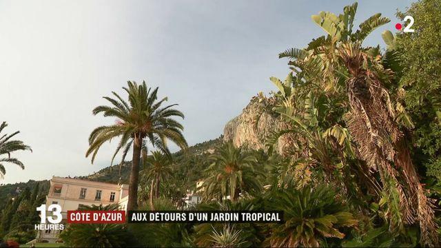 Côte d'Azur : au détour d'un jardin tropical fleuri en hiver