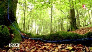 """L'internet de la forêt '""""Envoyé spécial"""") (FRANCE 2 / FRANCETV INFO)"""