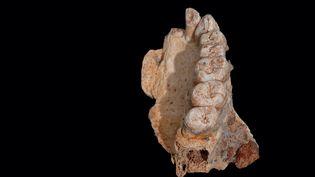 Le fragment de mâchoire portant sept dents, découvert dans la grotte de Misliya, sur le versant occidental du mont Carmel (Israël). (REUTERS)