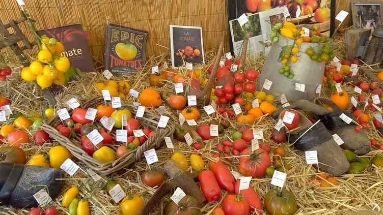 Quelques variétés de tomates sur les 4000 de la collection des Tomatophiles. (ISABELLE MORAND / RADIO FRANCE / FRANCE INFO)