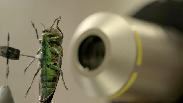 Microscultptures portraits d'insectes