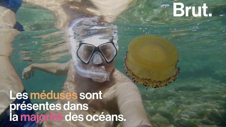 VIDEO. Quel comportement adopter pour faire face aux méduses ? (BRUT)