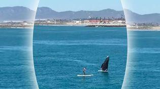 Capture d'écran montrant unebaleine quisurgit devant une homme en paddle, au large de la Californie, avril 2016 (AYSEAN BEAUCHAMP / YOUTUBE)