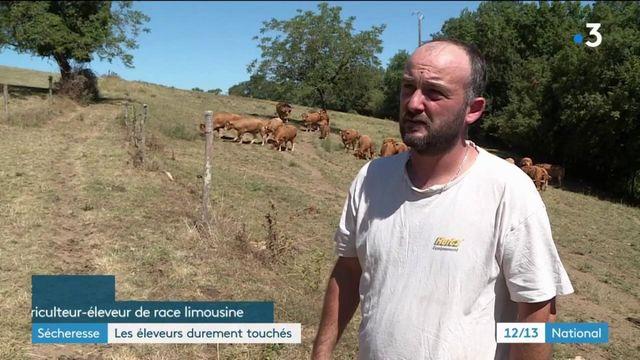 Sécheresse : la crise des éleveurs