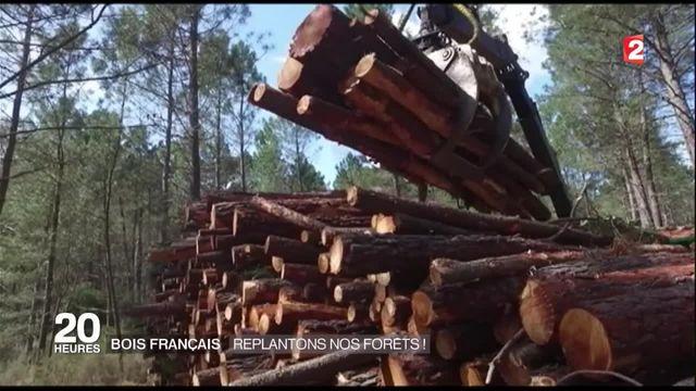 Dossier : le bois français de qualité devient rare