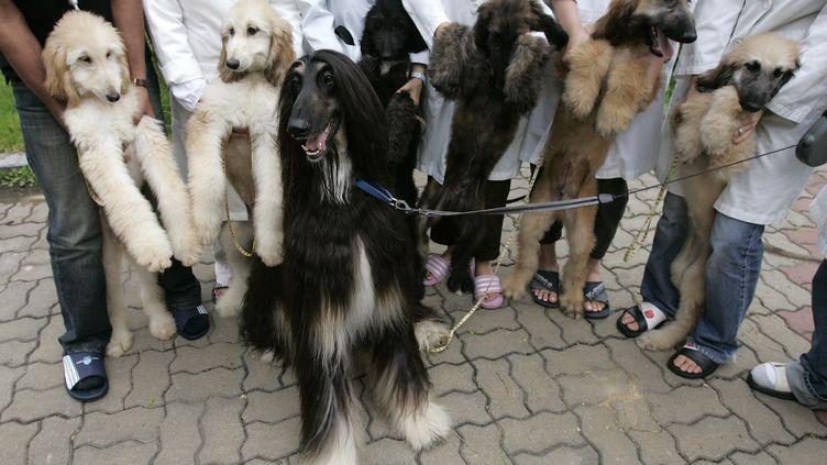Le premier chien cloné au monde, Snuppy, et ses chiots, le 5 septembre 2008 à Séoul (Corée du Sud). (JO YONG HAK / REUTERS)