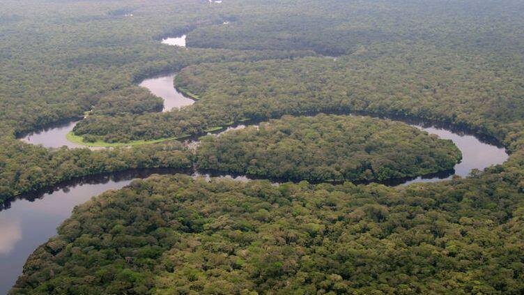 Le parc Salonga en République démocratique de Congo. (UNESCO)