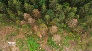 """Forêts en danger : que fait l'Etat ? (CAPTURE D'ÉCRAN """"PIÈCES A CONVICTION"""" / FRANCE 3)"""